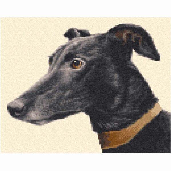A SQ GRH 18 Blk Greyhound