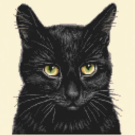 CAT-B2 Black Cat sq