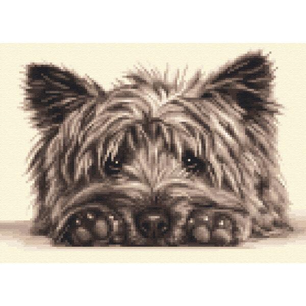 CRN 1 CAIRN Terrier sq