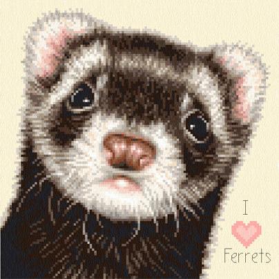 FER3 Ferret - Cupcake sq